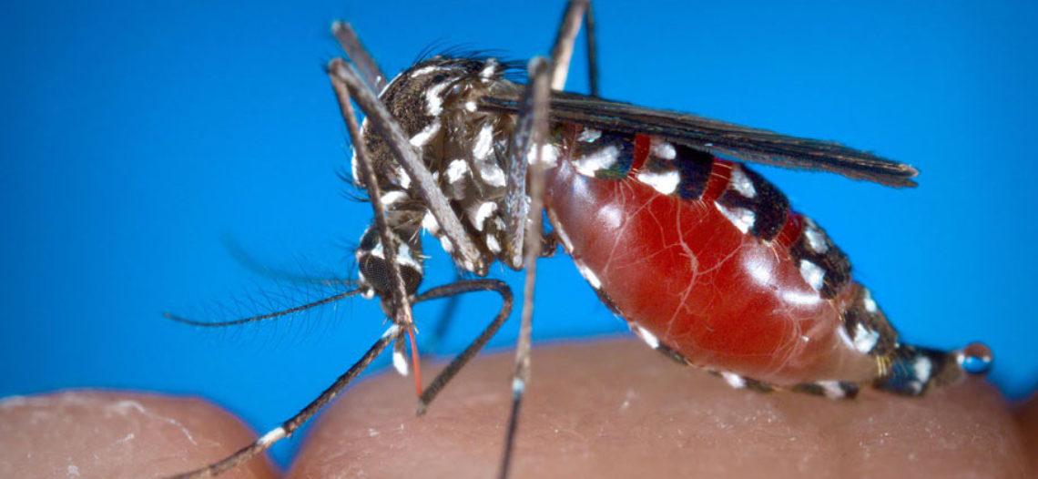 Muerte por virus del Nilo Occidental reportada en Maricopa County