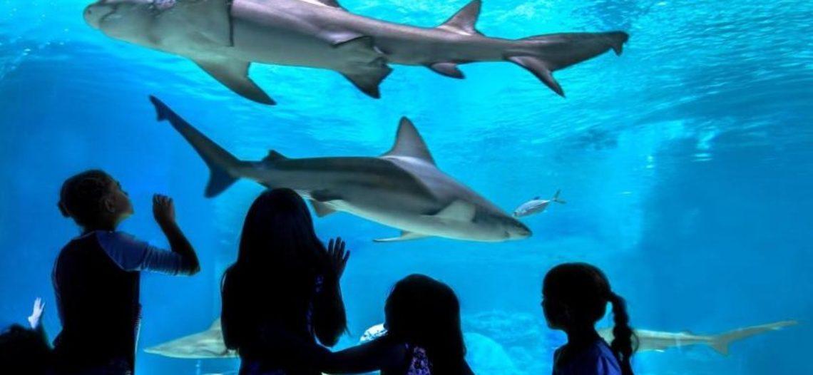 Experiencias inclusivas en Odysea Aquarium